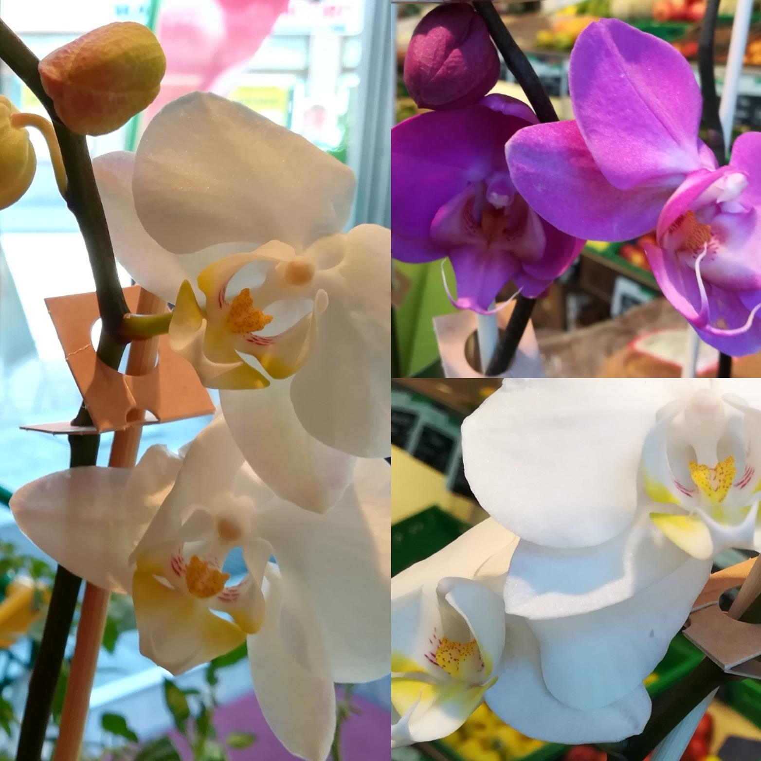 Bio-Orchideen zum Verkauf - Biomarkt Biodelikat Bad Tölz - Bioladen mit Atmosphäre