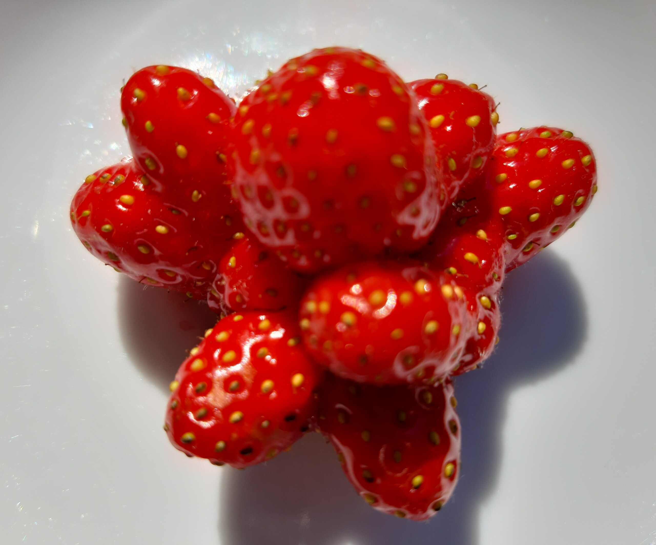 Erdbeeren - Bio-Obst Bio-Gemüse im Biogeschäft Biodelikat Bad Tölz